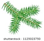 green spruce branch isolated on ... | Shutterstock .eps vector #1125023750