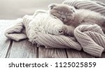 Stock photo a small fluffy kitten is sleeping on a knitted sweater on a wooden table space for text 1125025859