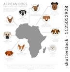 dogs by country of origin.... | Shutterstock .eps vector #1125052928