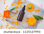 marigold or calendula essential ... | Shutterstock . vector #1125137993