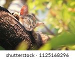 Stock photo cat sleeping on the tree 1125168296