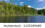 summer nature at lakeside... | Shutterstock . vector #1125189680