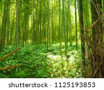 bamboo grove in arashiyama | Shutterstock . vector #1125193853