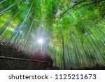 the sun shines through bamboo... | Shutterstock . vector #1125211673