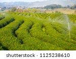 tea field on big mountain with... | Shutterstock . vector #1125238610