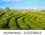 tea field on big mountain with... | Shutterstock . vector #1125238613
