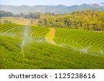 tea field on big mountain with... | Shutterstock . vector #1125238616