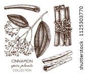vector hand drawn illustration... | Shutterstock .eps vector #1125303770