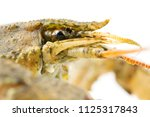 live crayfish close up ... | Shutterstock . vector #1125317843