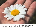 a large daisy flower on the...   Shutterstock . vector #1125318896