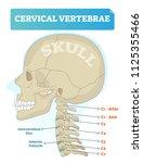 vector illustration of cervical ... | Shutterstock .eps vector #1125355466