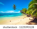tropical ocean beach  coconut... | Shutterstock . vector #1125393128