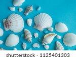 water shell art background   Shutterstock . vector #1125401303