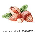 watercolor almonds. hand drawn... | Shutterstock . vector #1125414773