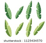 collection of green tea leaf.... | Shutterstock .eps vector #1125434570