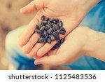 heap of sunflower seeds on a... | Shutterstock . vector #1125483536
