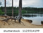 forest lake landscape with pine ...   Shutterstock . vector #1125514199