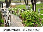 flower pots with petunia...   Shutterstock . vector #1125514250