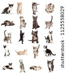 Stock photo set of twenty cute young playful kittens on white sized to print on letter paper or for use on 1125558029