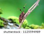 beetles   the fluffy pom pom... | Shutterstock . vector #1125594989