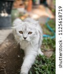 the cat is walking in the... | Shutterstock . vector #1125618719