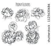 peony flowers set. vector... | Shutterstock .eps vector #1125630686