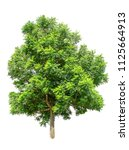 isolated tree on white... | Shutterstock . vector #1125664913