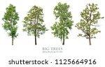 trees isolated on white... | Shutterstock . vector #1125664916
