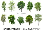 trees isolated on white... | Shutterstock . vector #1125664940