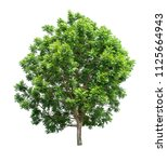 isolated tree on white... | Shutterstock . vector #1125664943
