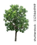 isolated tree on white... | Shutterstock . vector #1125664949