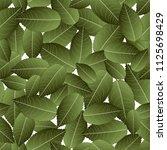 rose green leaves on white... | Shutterstock .eps vector #1125698429