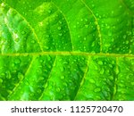 green leaf with water drops... | Shutterstock . vector #1125720470