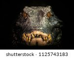 Head Of A Crocodile ...