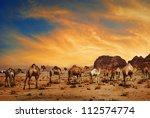 arabian camels in desert of... | Shutterstock . vector #112574774