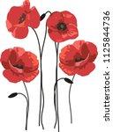 red poppy flowers   Shutterstock .eps vector #1125844736