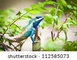 Wild Lizard In Thailand Close Up