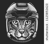 cat wild animal wearing hockey... | Shutterstock .eps vector #1125852623