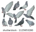 grey pigeons set  doves in... | Shutterstock .eps vector #1125853280