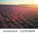 meadow of lavender at sunset.... | Shutterstock . vector #1125918608