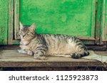 resting relax quiet cat near... | Shutterstock . vector #1125923873