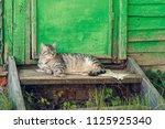 resting relax quiet cat near... | Shutterstock . vector #1125925340