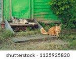 resting two quiet cat near... | Shutterstock . vector #1125925820