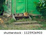 resting relax two quiet cat... | Shutterstock . vector #1125926903