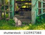 quiet cat sitting near open... | Shutterstock . vector #1125927383