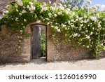 Rose Covered Garden Wall With...