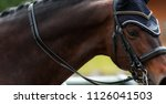 Stock photo close up portrait of horse in the horse ammunition to compete in dressage 1126041503