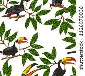 toucan bird. branches with... | Shutterstock .eps vector #1126070036