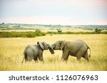 Stock photo baby elephants playing in the wild 1126076963