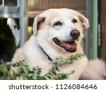 dog is smiling | Shutterstock . vector #1126084646
